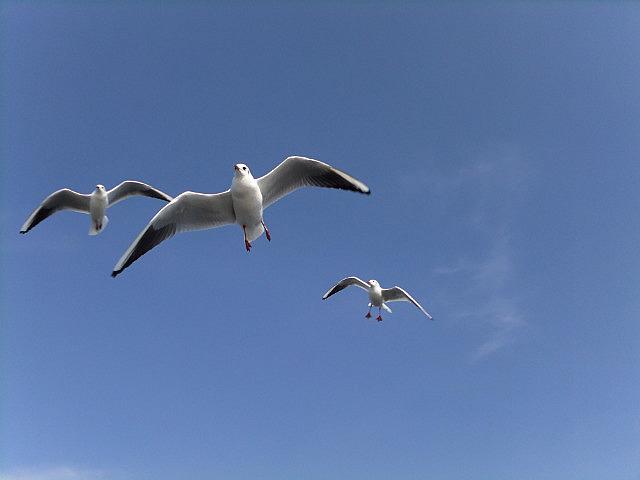 Kunming Seagull Lake Adventure