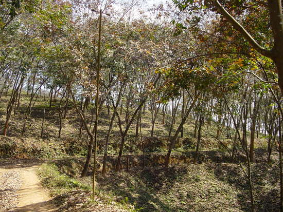The Jinghong Mud Map Walk (12)