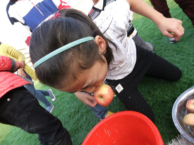 Apple Bobbing With Skippy