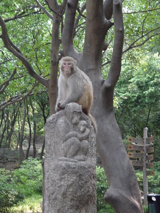 Qingxiu Shan 7