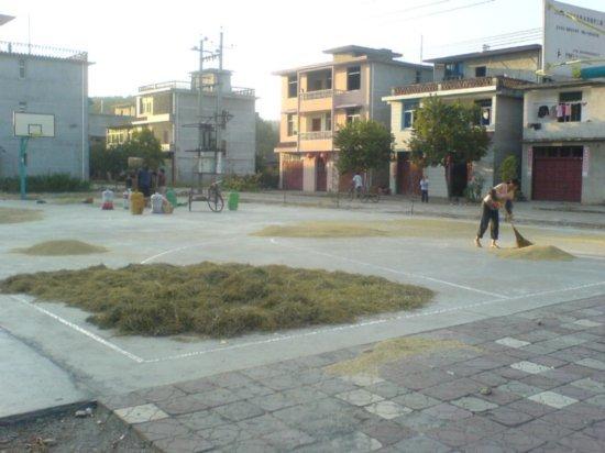 The Great Autumn Rice Harvest Ride 27