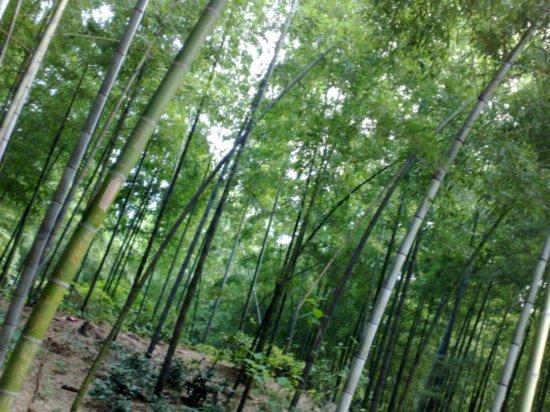 9-Jigongshan Third Day Adventure