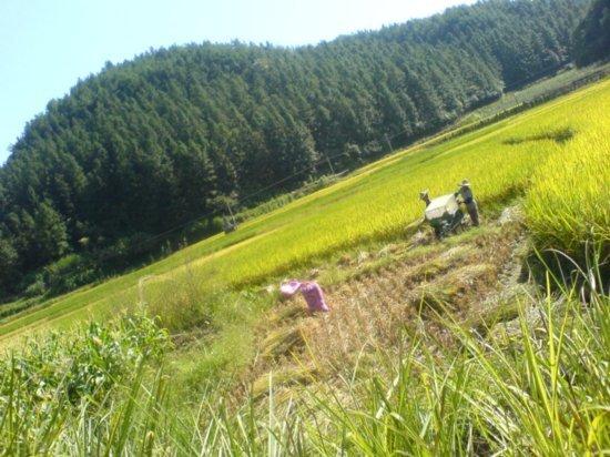 The Great Autumn Rice Harvest Ride 10