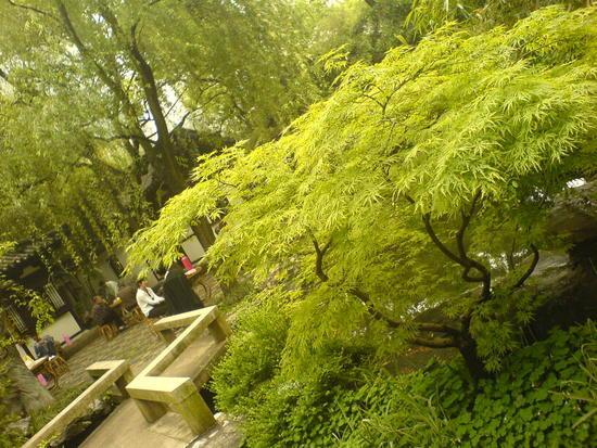 Shanghai City Temple Adventure (45)