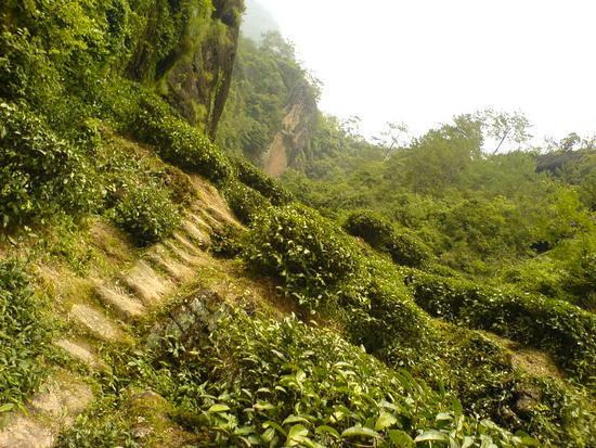 Wuyi Shan Day 2 (28)