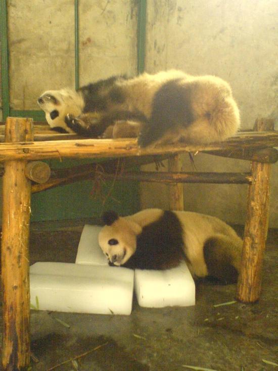 Panda Research Base (3)