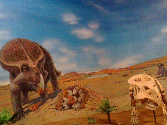 3-Inner Mongolia Museum