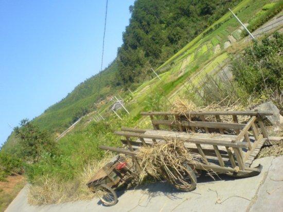 The Great Autumn Rice Harvest Ride 30