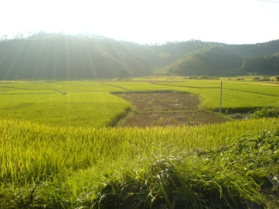 The Great Autumn Rice Harvest Ride 11