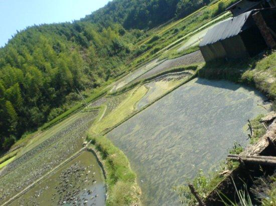 The Great Autumn Rice Harvest Ride