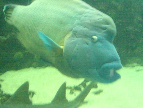 Underwater World & BBQ (7)