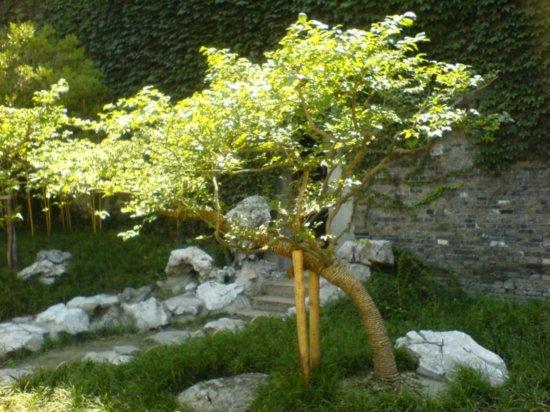 Yangzhou - He Gardens 1
