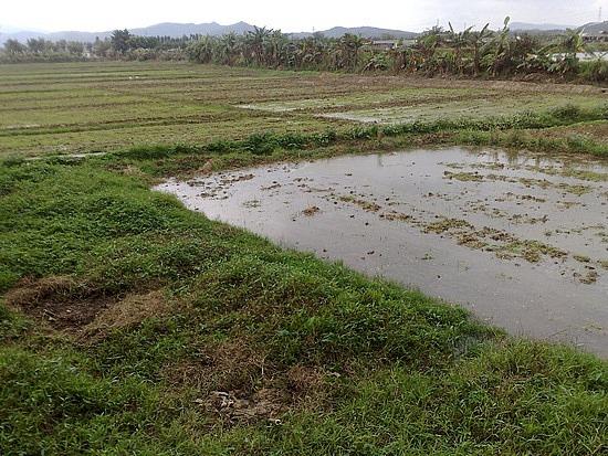 Kaiping Zili Village Diaolou Cluster