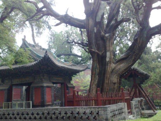19-Jinci Temple Adventure