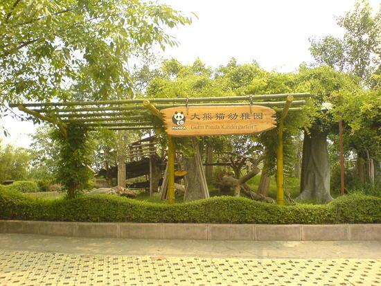 Panda Research Base (5)