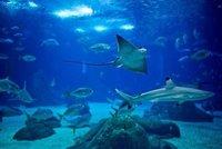 Oceanarium..bc13495ed_c.jpg