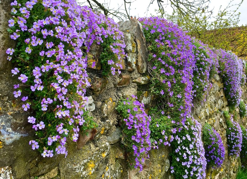 Stone wall along a Devon Lane