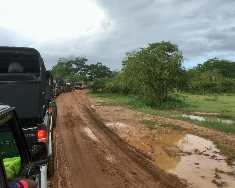 Jeep queue to view the Leopard at Yala National Park