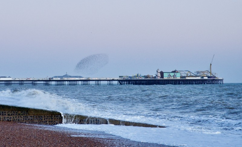 Murmuration of Starling over Brighton Palace Pier, one of the few places you can see it in the UK