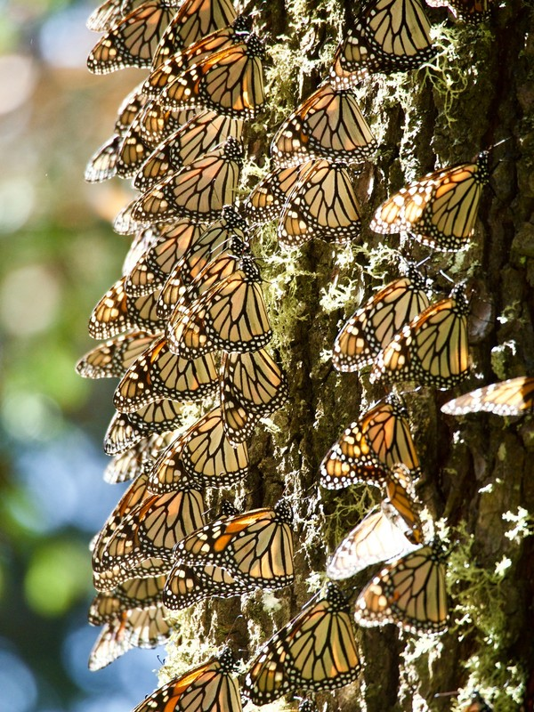 Butterflies resting on a tree trunk