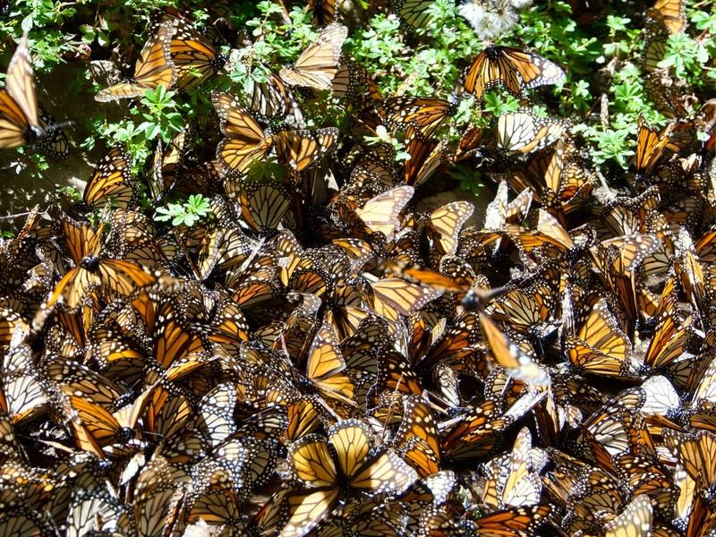 Butterflies covering stream