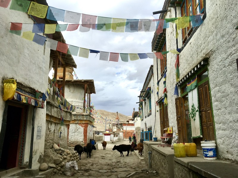 Lo Manthang street with cows