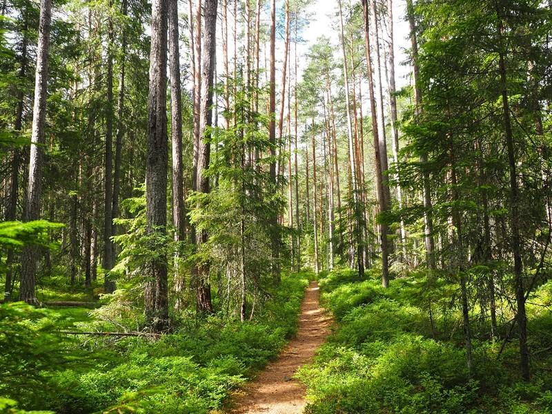 Forest section of the Viru Bog