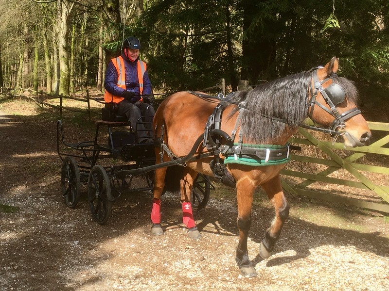 Pony and trap in New Forest NP