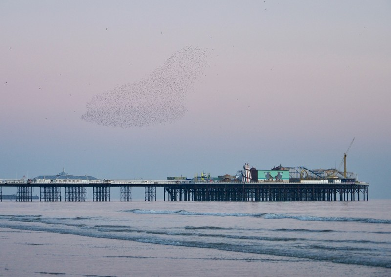 Murmuration always changing shape