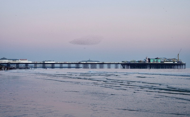 Brighton Pier, or Brighton Palace Pier is also a favourite for murmuration of Starlings