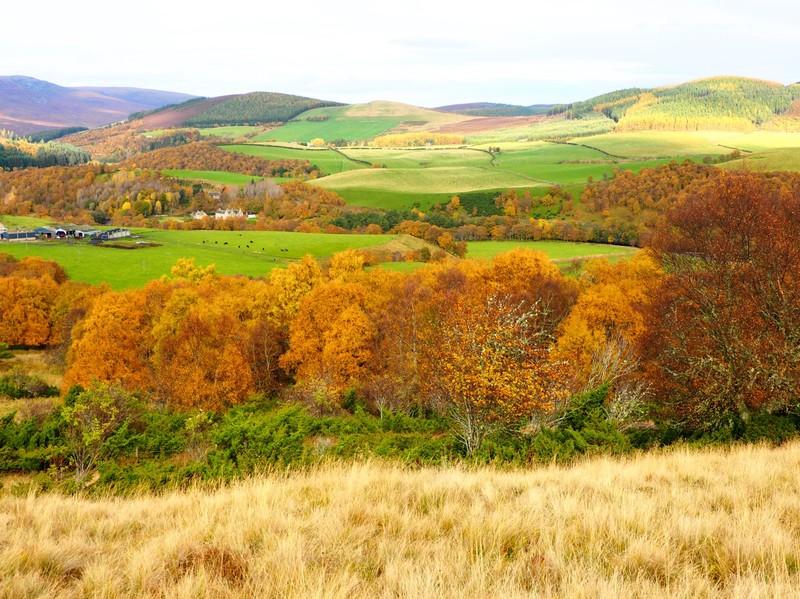 Cairngorms scenery