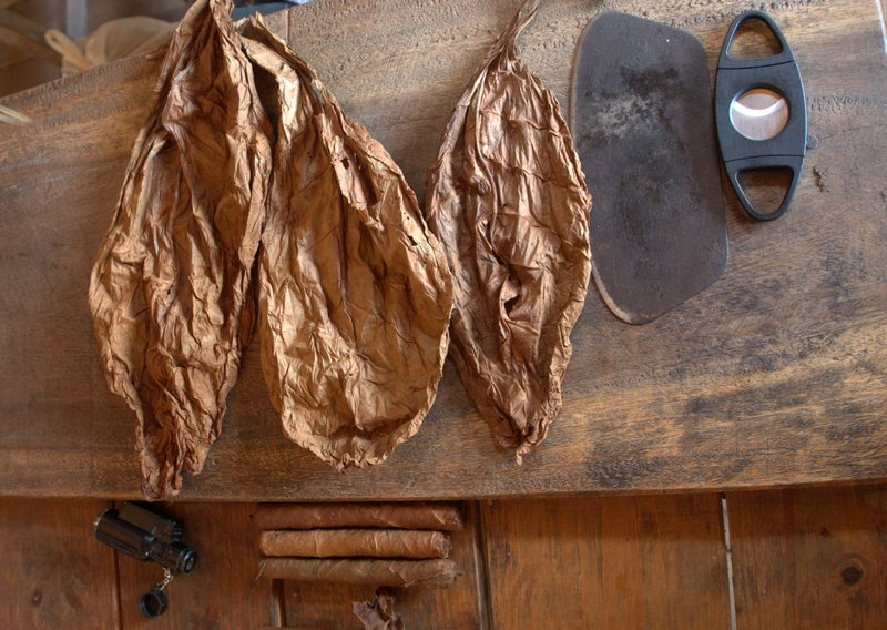 Dry Tobacco leaves and tools