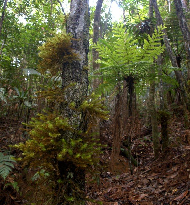 Flora in Parc Provincial de la Riviere Bleue
