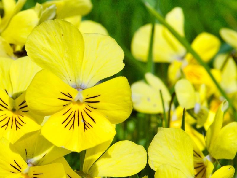 Floral Yorkshire Dales