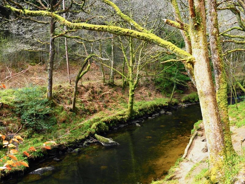 Teign Gorge walk