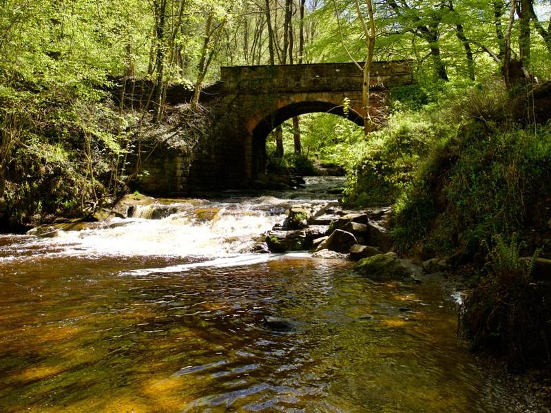 North York Moor walk