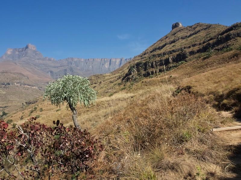 Ampitheatre walk in Royal Natal NP