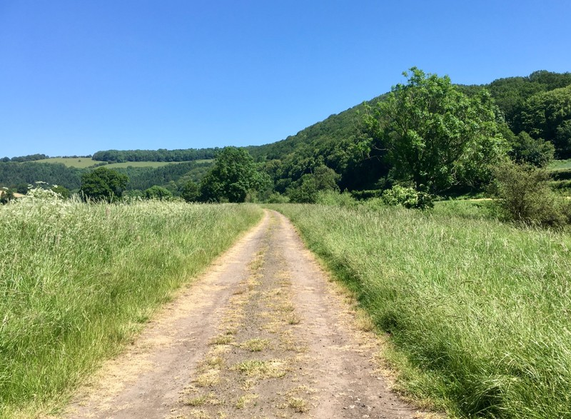 Walk in the Wye Valley