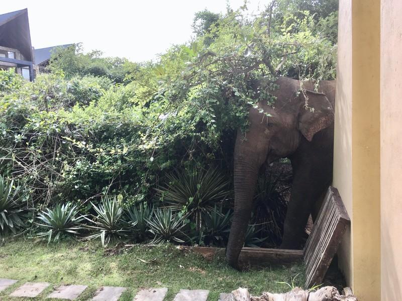 Elephant sneaking in