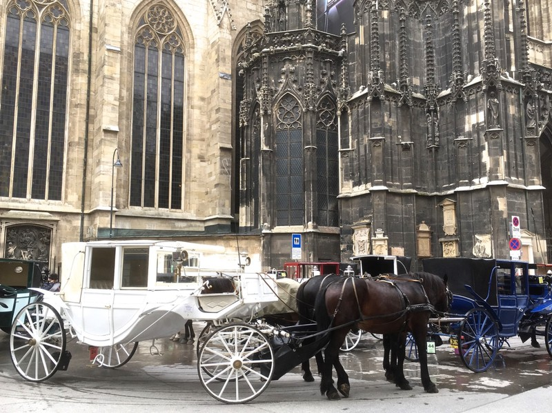Horse & Carriage waiting at St Stephens Cathedral in Vienna
