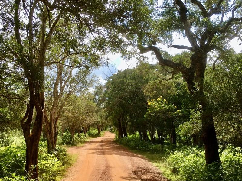 Wilpattu National Park