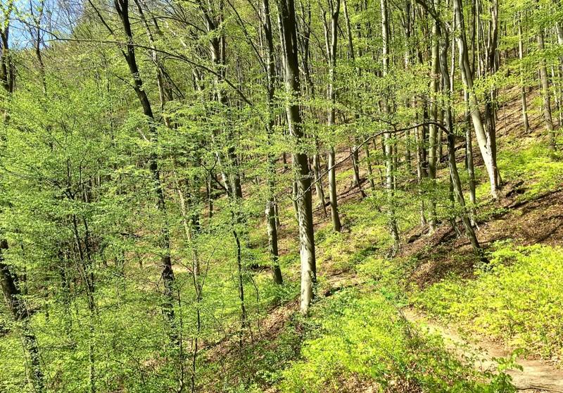 Forest above Trenčianske Teplice