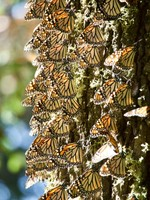 Butterflies resting on a tree trunk