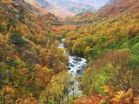 It's raining but still beautiful autumn colours