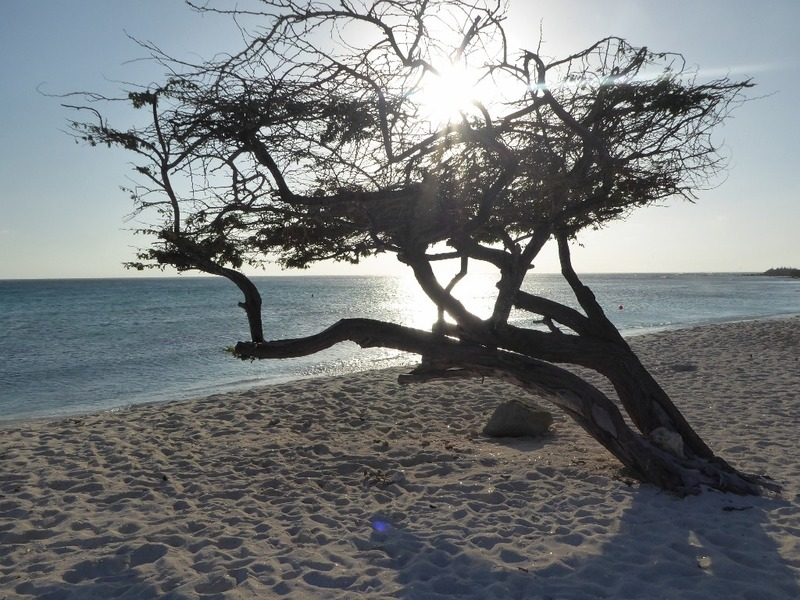 Arashi Beach tree