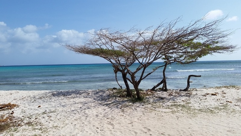 Funky beach tree