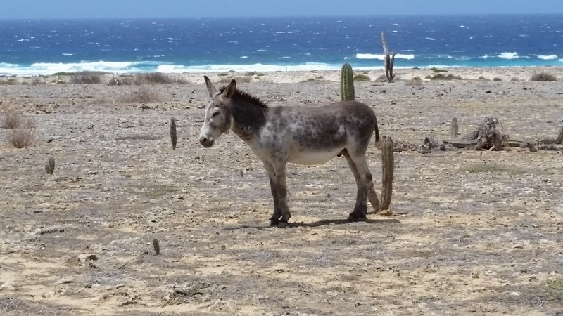 Wild donkey by the ocean