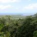 Daintree Rainforest & River