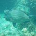 Ginormous fish