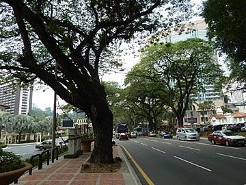 Treed streets